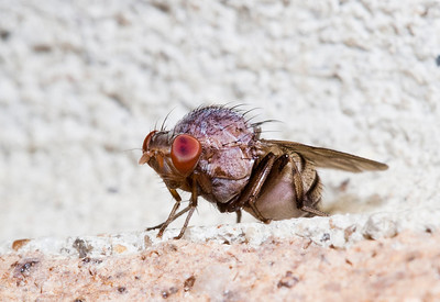 A close up of a fly on a wall.