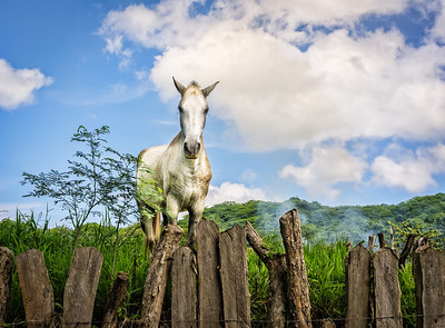 A horse on a farm in Tamarindo, Costa Rica.