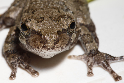 A close up of a frog.