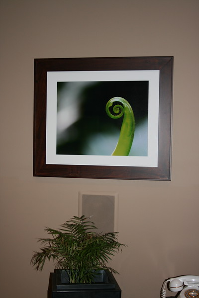 bird's nest fern framed