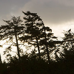 An eagle is silhouetted against a stormy sky in the Pacific Rim National Park.