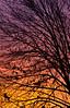 Autumn Sunset, Columbus -2010