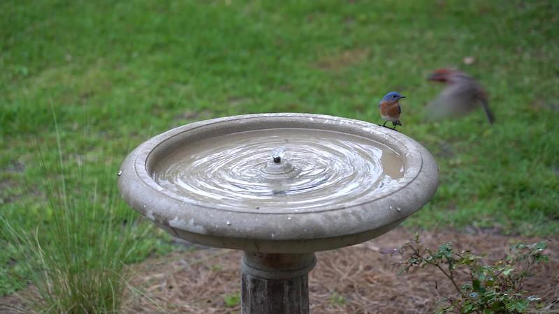 Backyard Birds in Slow Motion