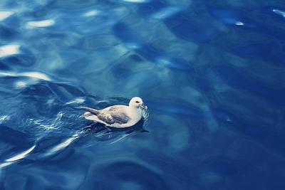 Seagull & silky sea