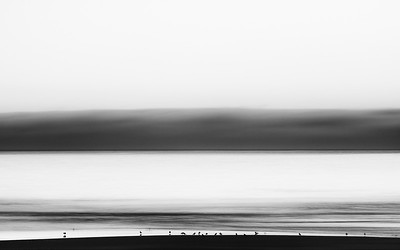 Birds & Ocean B&W - NonSignature-