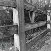 Fence at Alton Baker Park (Victorian Portrait version)