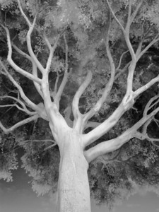 Branches in Infrared