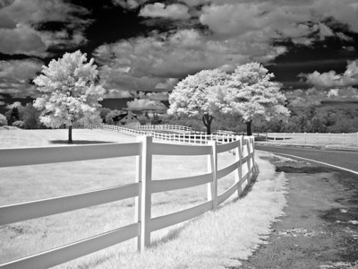 Fence and Trees in Infrared, Rye Beach, New Hampshire