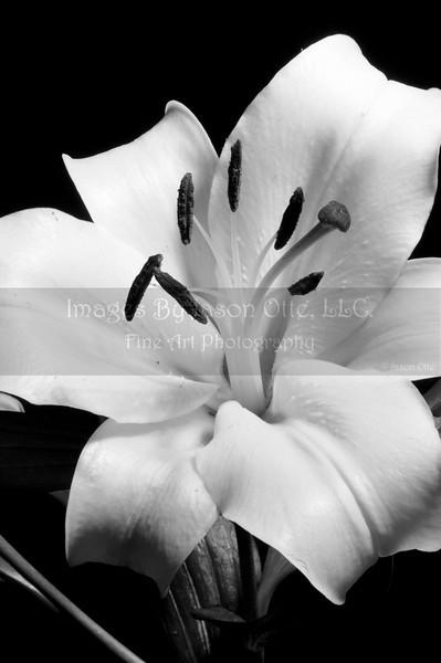 Lily 2010-05-21 - 21-32-17 - Version 2