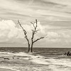 Solitary Sentinel, Hunting Island State Park, sepia