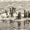 Barnacles, stumps and foaming waves, Hunting Island State Park, SC
