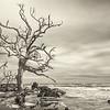 Hunting Island State Park boneyard beach, Beaufort, SC
