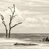 Still standing, Hunting Island State Park boneyard Beach, Beaufort, SC
