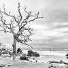 Boneyard Beach, Hunting Island State Park, SC, black and white
