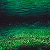 Vegetation refletion in the water surface, Rio Sucuri, Bonito, Brazil