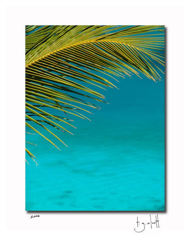 Palm, St. John USVI