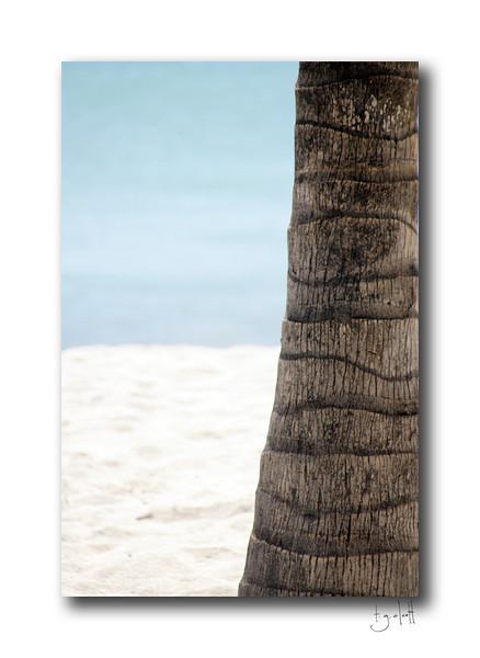 Palm Trunk, Philipsburg, Sint Maarten