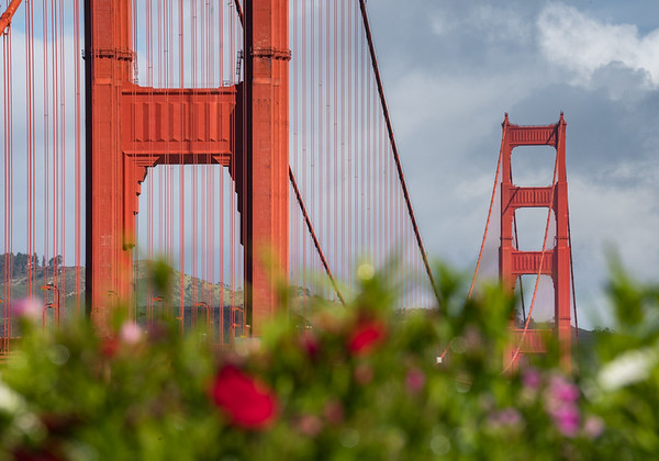 Golden Gate Spring