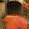 Covered Bridge and Maple Leaf Composite