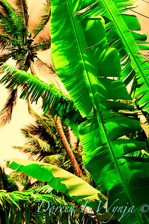 Tropical Greens_103