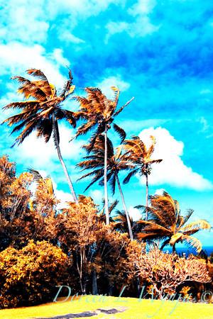 Maui Skies_110A