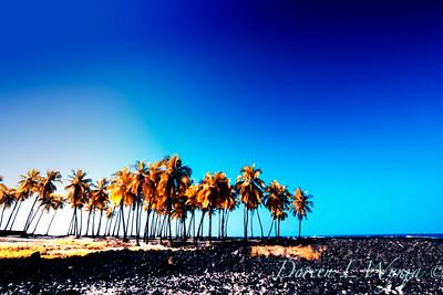 Coconut Grove_043
