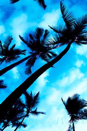 Blue Palms_014