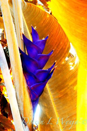 Purple Torch_158