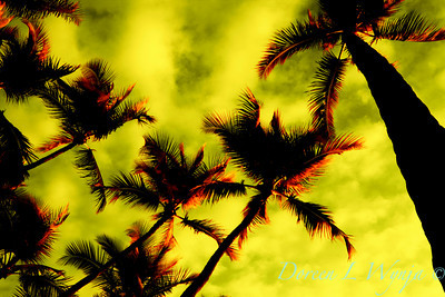 Fire Palms_009