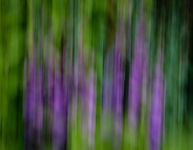Monet's Garden Abstract 2