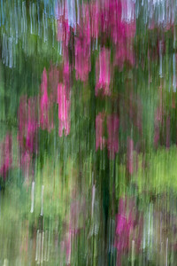 Monet's Garden Abstract 5