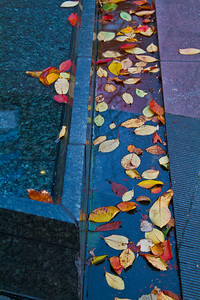 Leaves in a Fountain