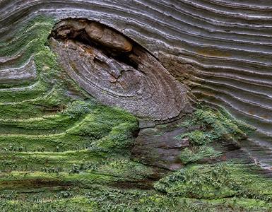Woodknot & Moss