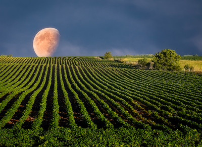 Moon Over Soybeans