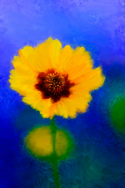 Coreopsis painted blue background-2