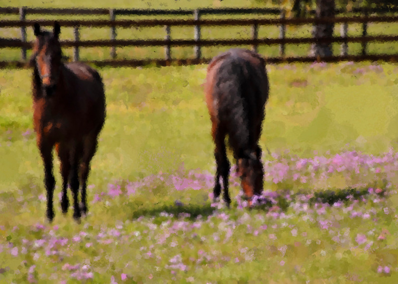 horses in phlox painted smugmug