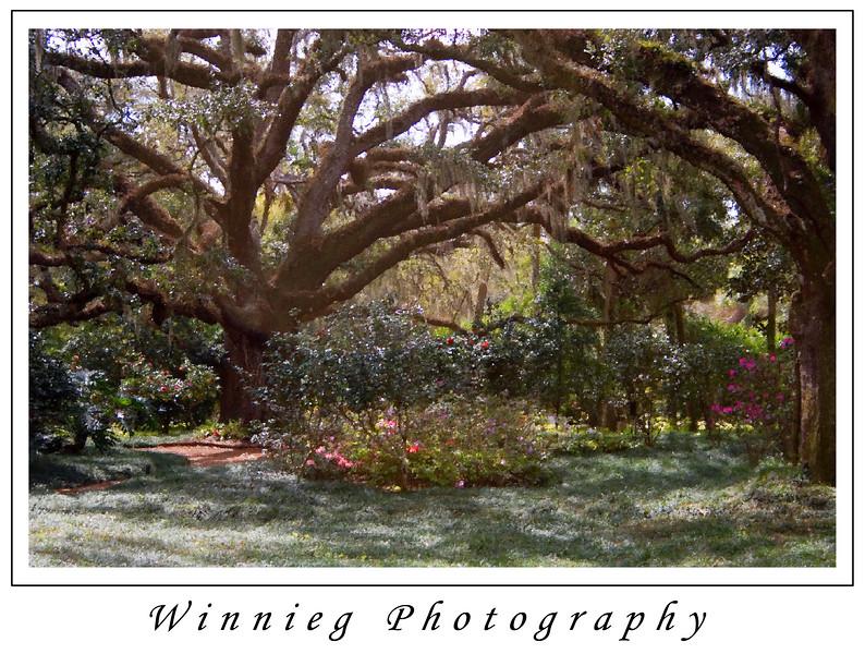IMG_0756PAINTED TREES gallery print