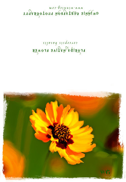 coreopsis card stock
