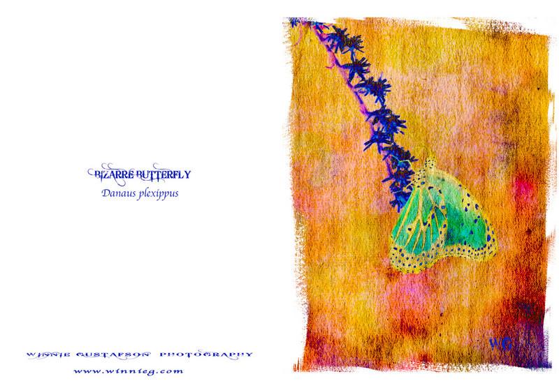 Bizarre Butterfly 3