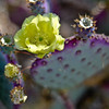 "<div class=""boxTop""><h3 id=""galleryTitle"" class=""title notopmargin"">Cactus in Bloom, Scottsdale, Arizona, 2010</h3>"