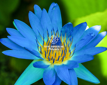 Blue flower Buu Mon Temple