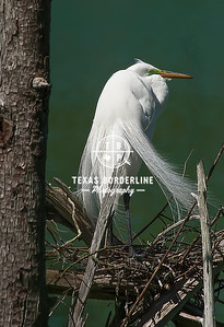 Egret_green Backdrop_