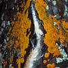 Lichen Art