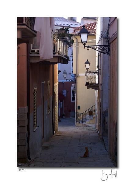 Il Gatto, La Maddelena