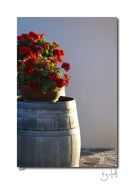 Vineyard Barrel,