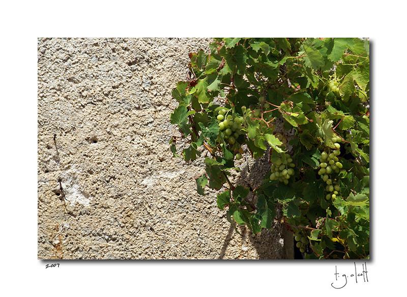 Wild Grapes, Punta Sardegna