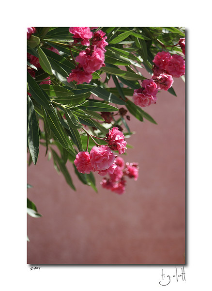 Flowers, Palau