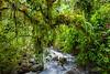 El Yunque Rain Forest, PR