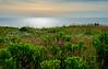 180627 - 5689 Summer Sunset - Nantucket, MA