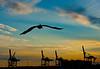 100215 - 1998 Pelican Over Miami Harbor, FL